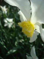 springtime_by_lifesagame-d4lyoux