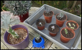 The 'after' shot, though we did some more after this. You can't see any were taken from the original spiky succulent