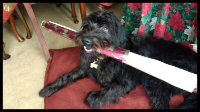 A black puppy holding wrapping paper in its mouth