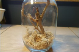 The home ready for my new pet. It's a jar with moss in the bottom and a stick with little branches coming off it